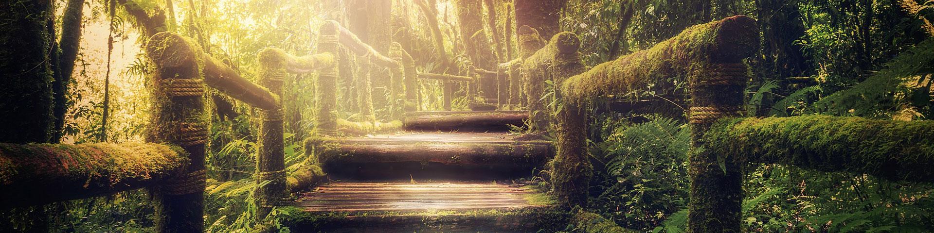 Perdere-la-vista-nel-bosco-per-tornare-a-vedere-WildWisdom_Blog
