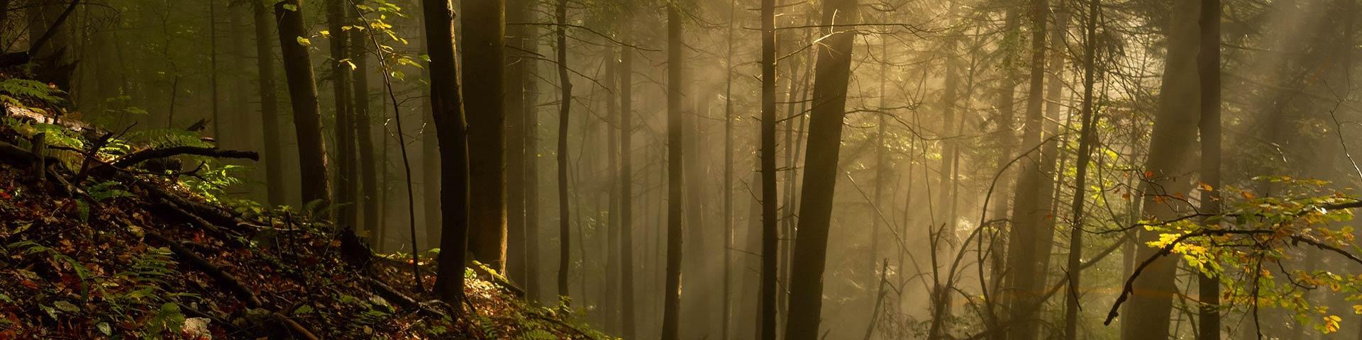 Bagno-di-foresta-un´antica-pratica-giapponese_Wildwisdom-Blog