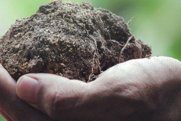 Amare-la-Natura-12-azioni-concrete-per-proteggere-l'ambiente-WildWisdom-Blog