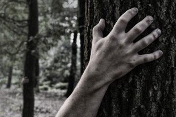 Come-le-fiabe-ci-hanno-iniettato-la-pl-aura-del-bosco-e-3-step-per-superarla-WildWisdom-Blog